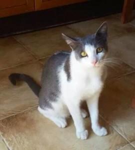 Gattino scomparso a Montepaone Lido
