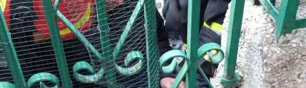 Catanzaro Lido - Liberato dai Vigili del Fuoco cagnolino incastrato in un cancello