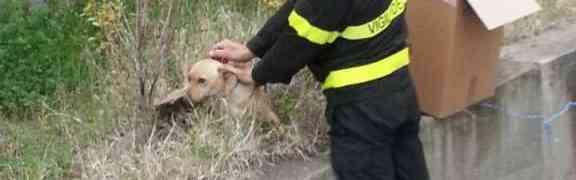 Catanzaro - Vigili del Fuoco impegnati nel salvataggio di un cucciolo
