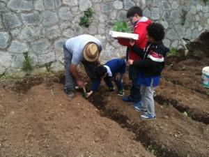 Attività conclusiva dell'orto in condotta, scuola elementare di S. Caterina Jonio