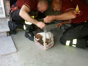 Catanzaro – Salvato dai vigili del fuoco un cane precipitato in un tombino