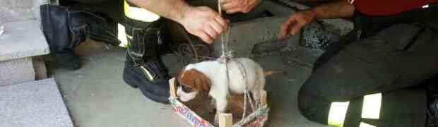 Catanzaro - Salvato dai vigili del fuoco un cane precipitato in un tombino