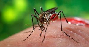 zika (1)