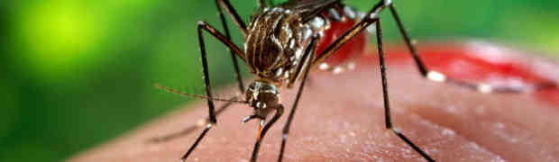 Zika, è allarme dalla Svizzera: 28 casi tra cui molte donne incinte