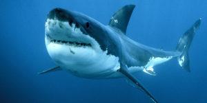 Squalo uccide pescatore, si tratta del primo attacco mortale dall'inizio dell'anno