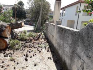 Satriano – Plauso all'amministrazione comunale per taglio alberi pericolosi
