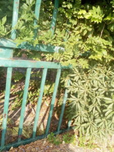 Montauro – Tolti rifiuti nell'Acqua splash