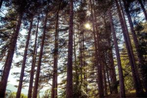 Ricerca scientifica: in Calabria si respira l'aria più pura d'Europa