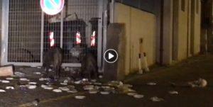 VIDEO | Cinghiali nei pressi dell'Ospedale di Soverato